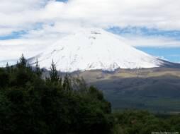 Казино вулкан нет вип. Vip club vulkan net.